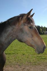 Horsehead
