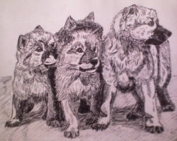 wilczki 2