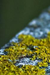 Moss by iPanic