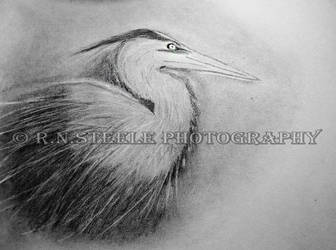 Great Blue Heron Drawing by RNSteele-Photography