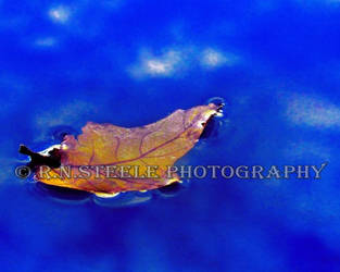 Floating Post Oak Leaf by RNSteele-Photography