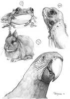 ANIMALS by Rigrena
