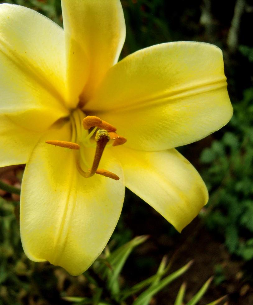 Sunny Petals by rlgarrard