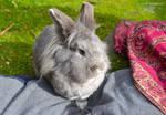 Leslie Rabbit