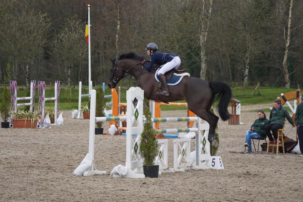 bay horse show - photo #16