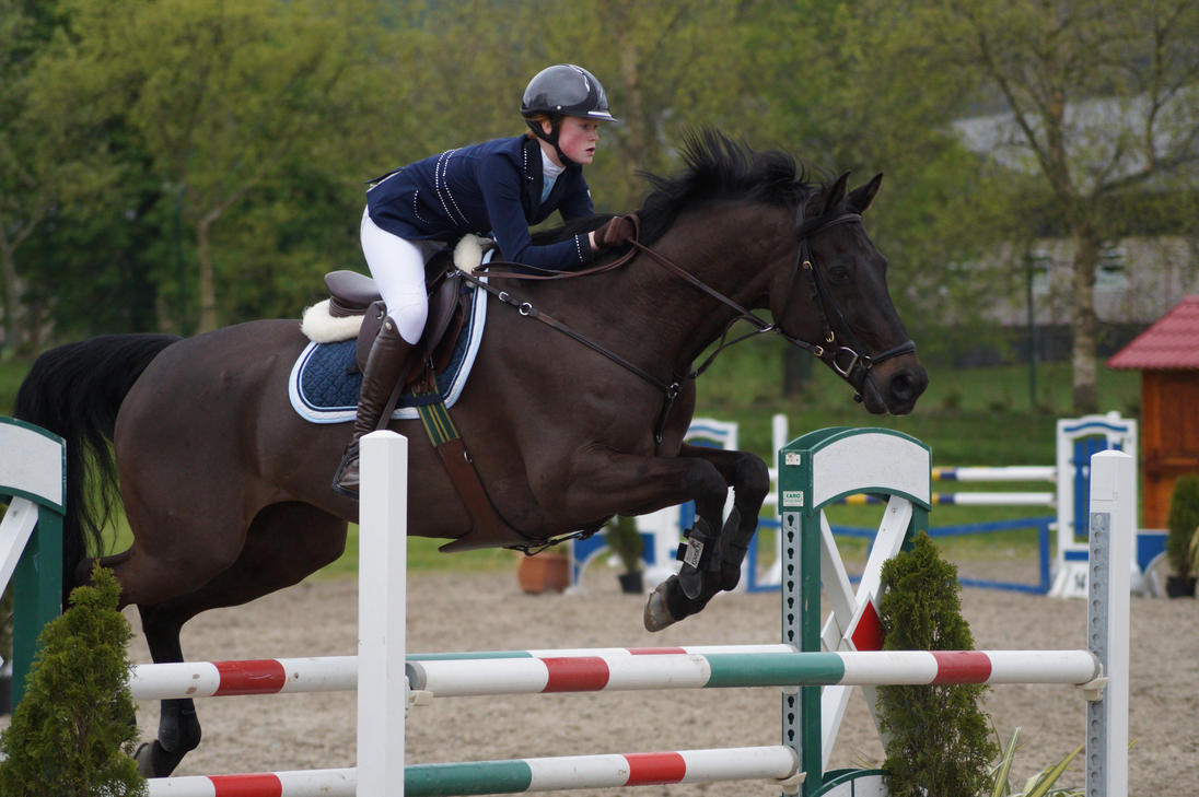 bay horse show - photo #5