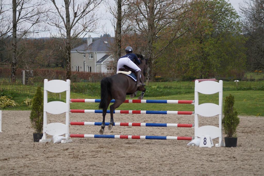 bay horse show - photo #11