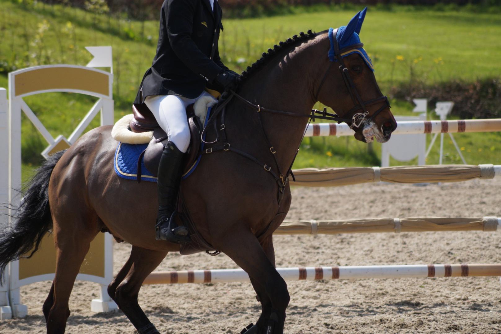 bay horse show - photo #2