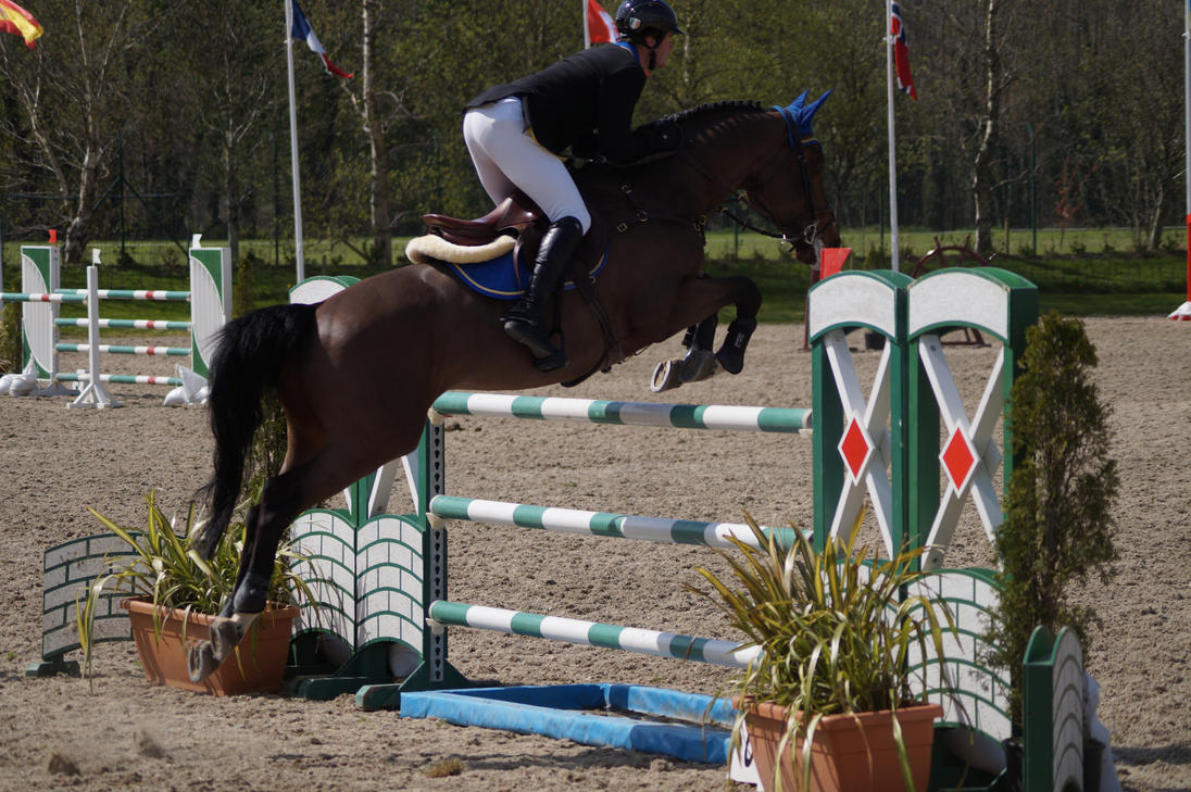 bay horse show - photo #10