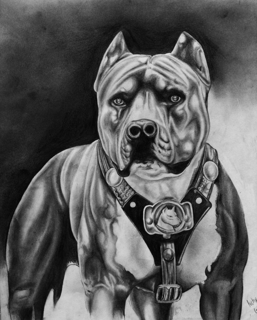 Pitbull Champion by RickyGonzalez on DeviantArt