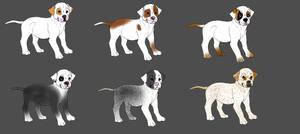 American Bulldog Puppy Adopts