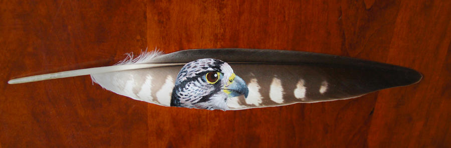 Peregrine falcon feather by DarkGrungeWolf