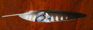 Peregrine falcon feather