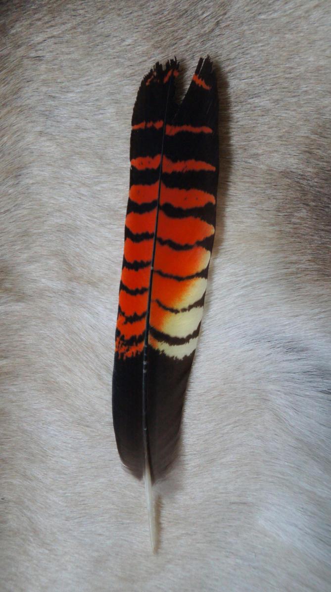 Red-tailed Black Cockatoo Feather by DarkGrungeWolf on deviantART
