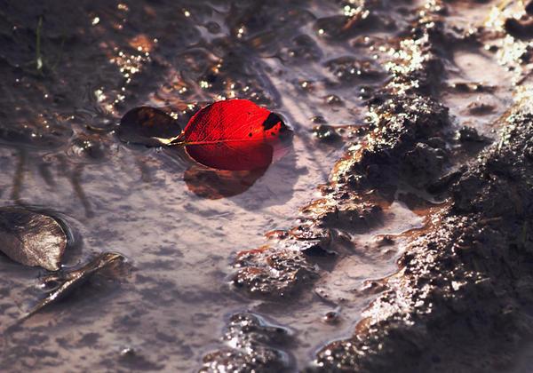 autumn by cloe-patra