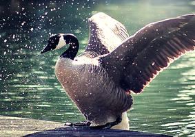 splash by cloe-may