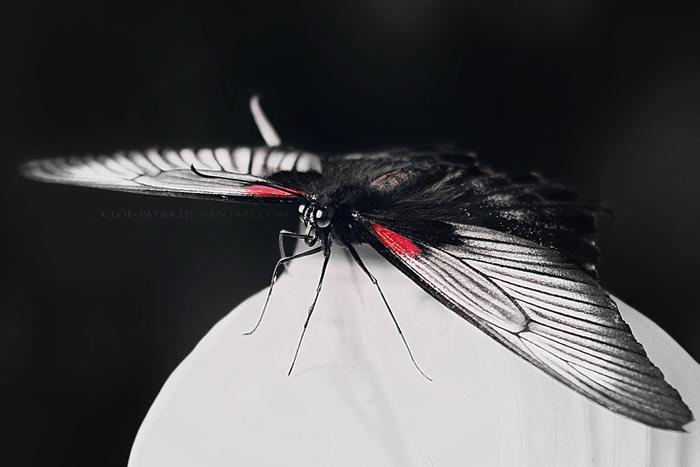 butterfly2 by cloe-patra