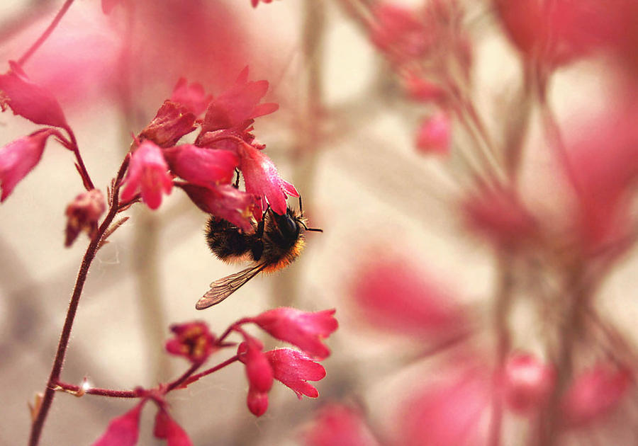 bumblebee by cloe-patra