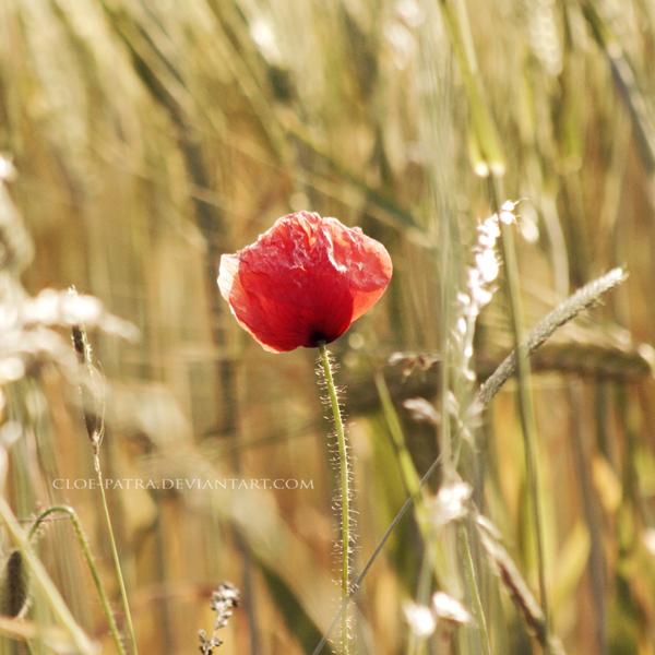 poppy by cloe-patra