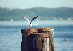 gull by cloe-may