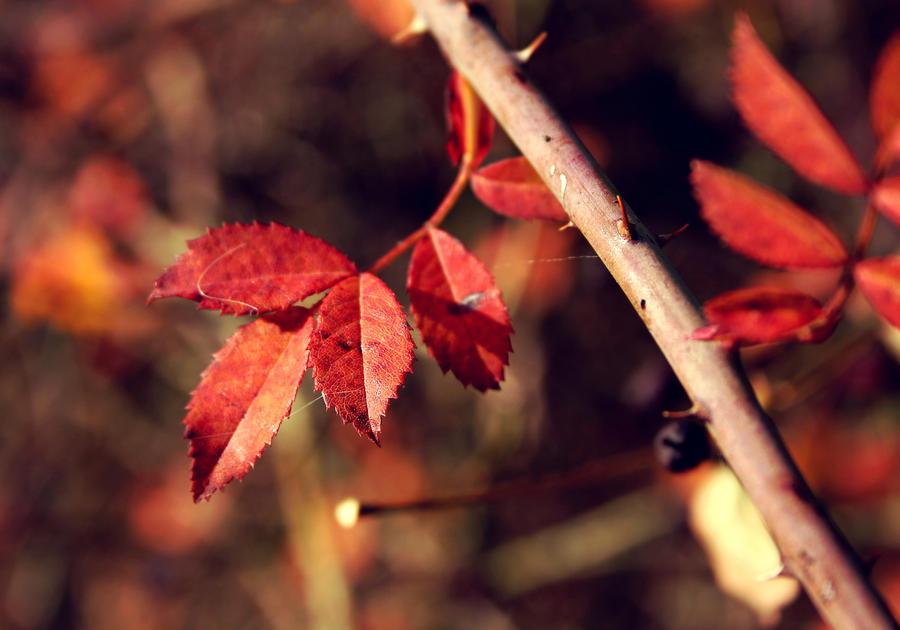 autumn leaves by cloe-patra