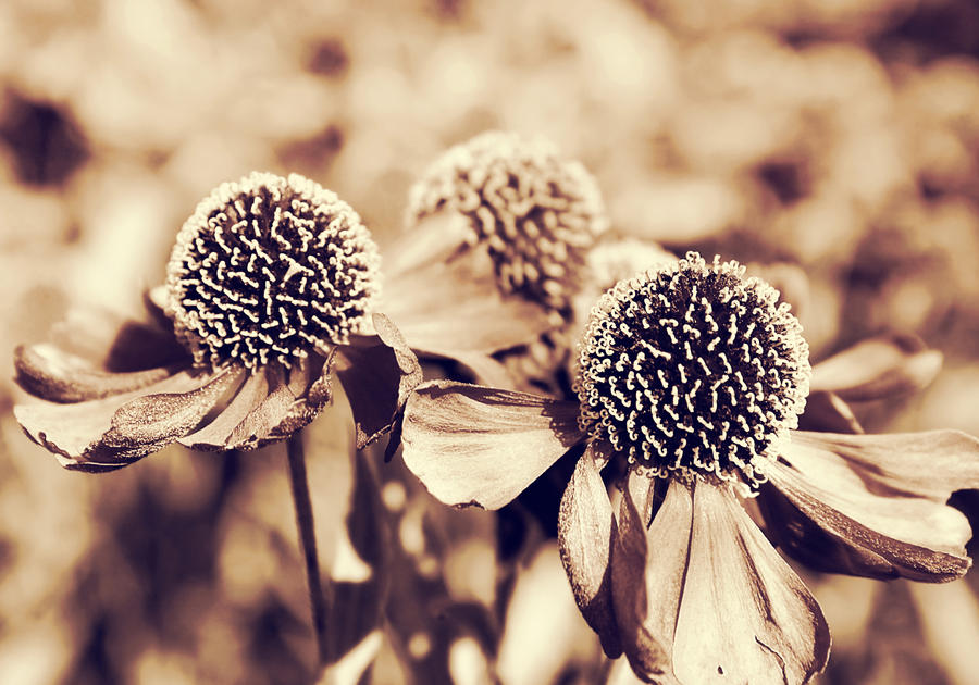 monochrome flowers by cloe-patra