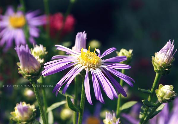 lilac by cloe-patra