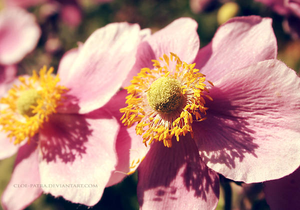 summer by cloe-patra