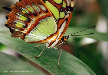 butterfly 5 by cloe-may