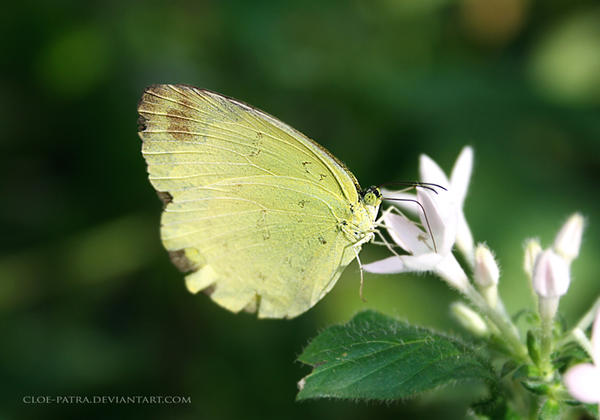 butterfly 8 by cloe-patra