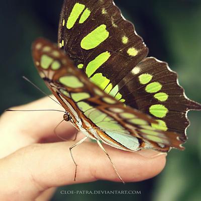 butterfly 6 by cloe-patra