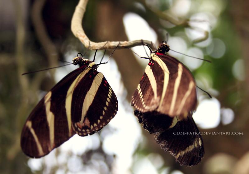 butterflies by cloe-patra