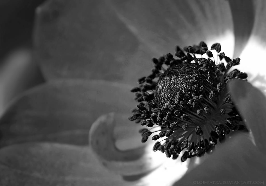 flower by cloe-patra