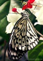 butterfly 10 by cloe-may