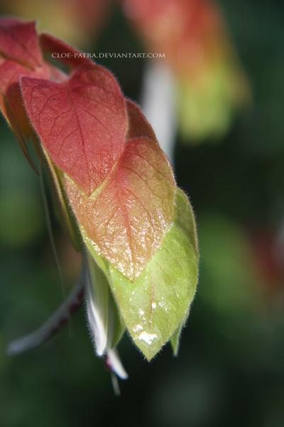 plant by cloe-patra