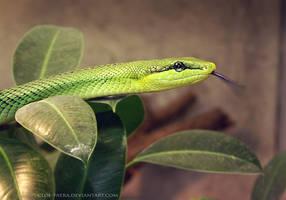 snake by cloe-may