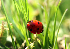 ladybug by cloe-may
