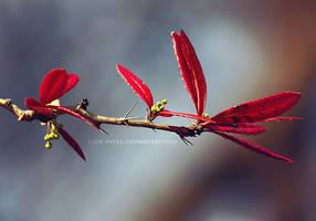 leaves by cloe-may