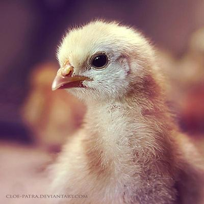 chick by cloe-patra