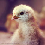 chick by cloe-may