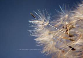 dandelion by cloe-may