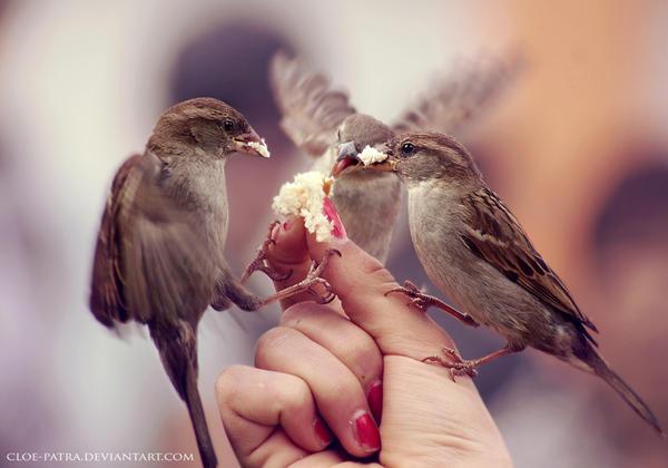 sparrows by cloe-patra