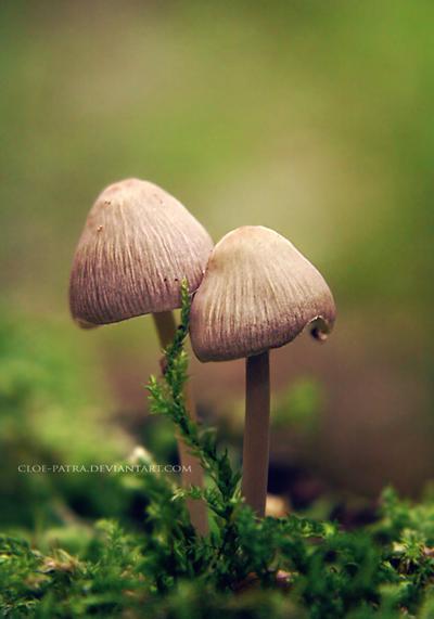 mushrooms by cloe-patra