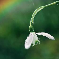 week 19: spring rain by cloe-may