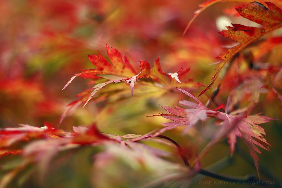 week41: oh, autumn pt.1 by cloe-patra