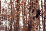week4: winter is coming by cloe-may