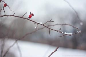 hello cold world by cloe-may