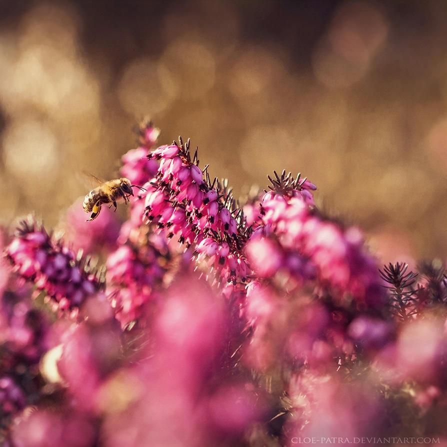summertime... by cloe-patra