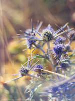thistle by cloe-may