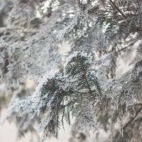 22.33 frosty by cloe-may
